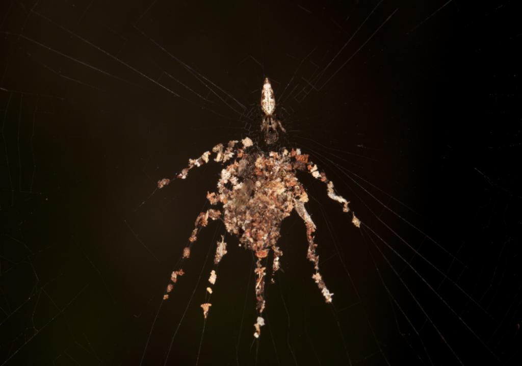 spiderdecoy